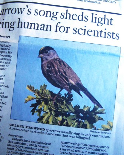 Sparrow 2